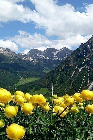 Almwiese mit gelben Blumen
