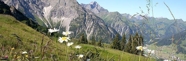 Almwiese mit Blick auf die Berge